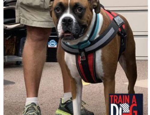 Vantagepoint AI Helps Veterans Who Need Service Animals