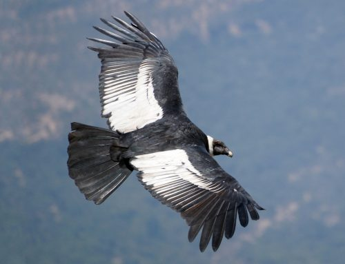Understanding The Power Of Iron Condors in Options Trading